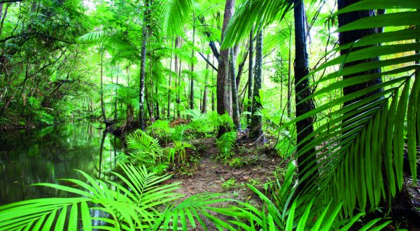 Ferns In Daintree Rainforest | Daily Tours Departing From Cairns & Port Douglas | Daily Departures
