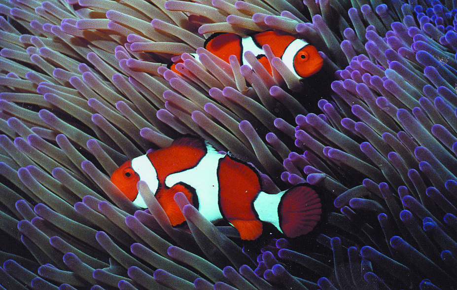 Cairns tours attractions the cairns port douglas for Buy clown fish