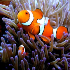 Find Nemo and then you will find Dory