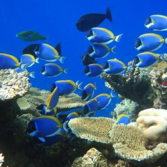Find Nemo & find Dory and lot's more colouful marine life on Australia's Great Barrier Reef
