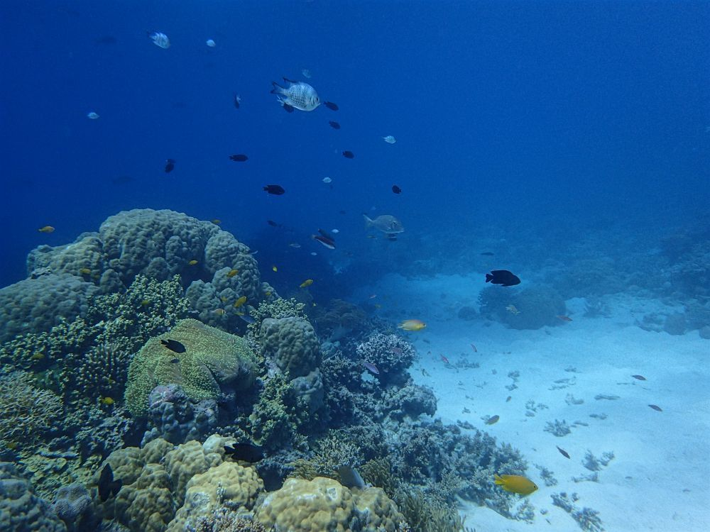 Cairns scuba dive training centre learn to dive on the great barrier reef - Dive great barrier reef ...