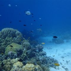 Fish and Coral on our Great Barrier Reef Tour