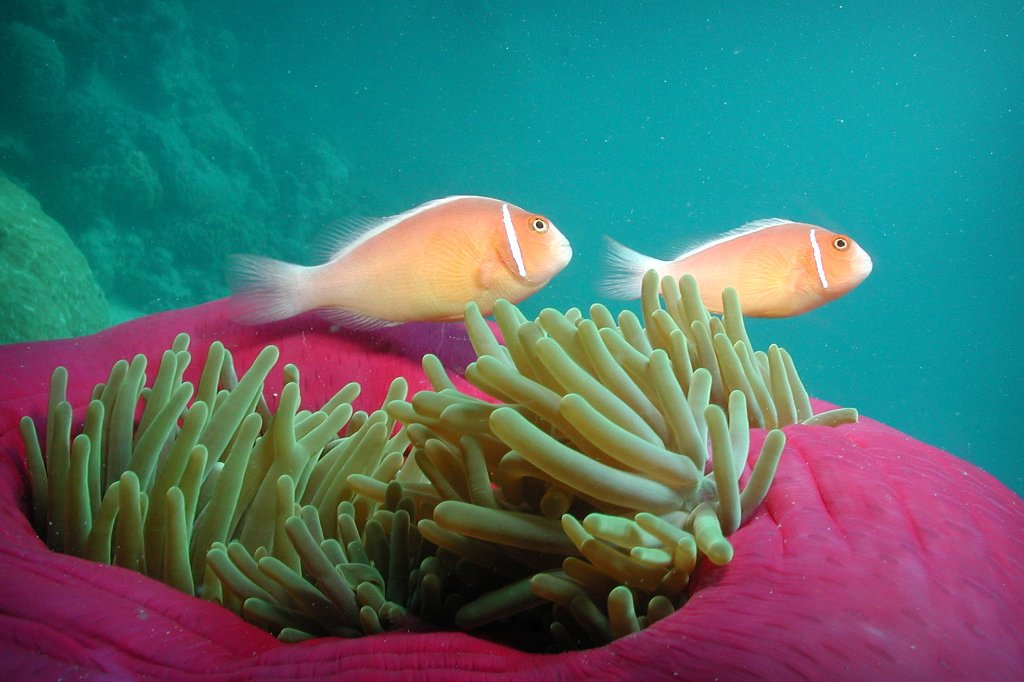 Diving cairns scuba diving liveaboard trips 5 star for Great barrier reef fish