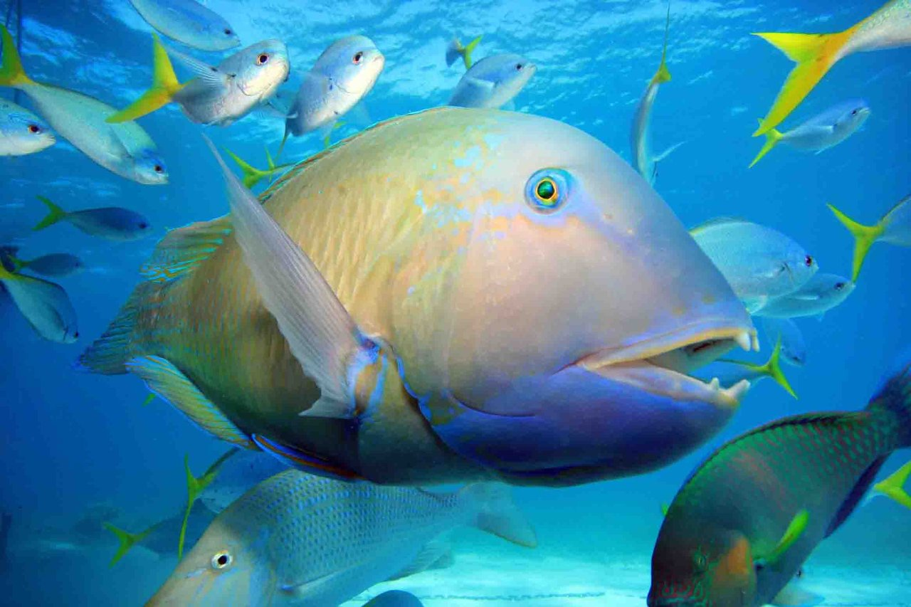 Cairns attractions low isles port douglas island tour for Great barrier reef fish