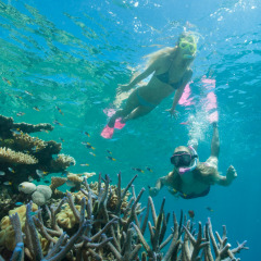 Fly Cruise Reef Trip | Snorkel On The Great Barrier Reef