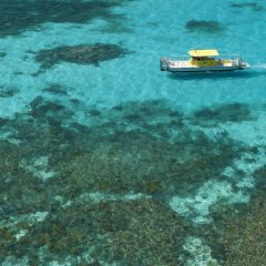 Fly out to Green Island by helicopter and go swimming and snorkelling for the day