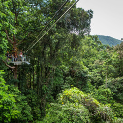Flying Through the Forest - Daintree Cape Tribulation Ziplining Tour