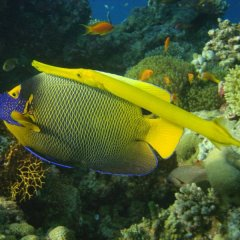 Free Scuba Dive on the Great Barrier Reef