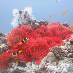 Free snorkel tours on the Great Barrier Reef