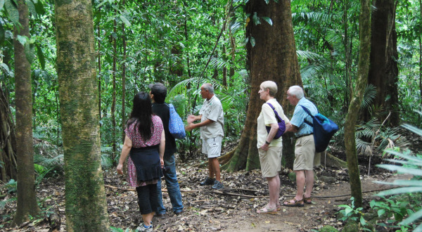 Full Day Guided Private Charter to the Daintree | Explore the Oldest Rainforest in the World