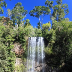 Full Day Rainforest & Waterfalls Tour | Ex Cairns