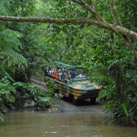 Full Day Rainforestation Nature Park & Kuranda Incl Skyrail Rainforest Cableway | Army Duck Tour