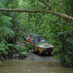 Full Day Rainforestation Tour Departing From Port Douglas | Army Duck Tour