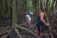 Full Day Tour | Aboriginal Culture | Exploring The Mangrove | Visit Tropical North Queensland