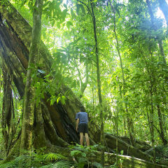 Full Day Tour From Port Douglas Tropical North Queensland | Daintree Rainforest | Small Group