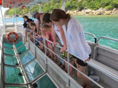 Glass Bottom Boat - Optional activities at Fitzroy Island Resort