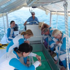 Great Barrier Reef Tour | Glass bottom boat tour Great Barrier Reef Australia