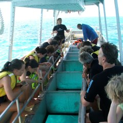 Take a glass bottom boat tour around the coral reef gardens near Upolu Cay