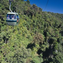 Glide above the rainforests in the Skyrail Gondola from Cairns Queensland Australia