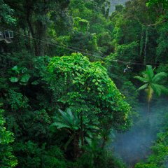 Glide from station to station whilst Jungle Surfing in the Daintree Rainforests of Tropical North Queensland