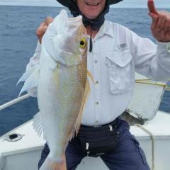 Gold Band Snapper