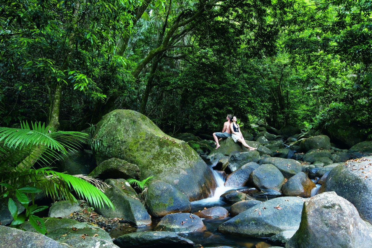 Exclusive Half Day Rainforest And Waterfall 4wd Adventure