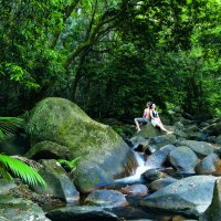 Discover World Heritage Daintree Rainforest | Day Trips