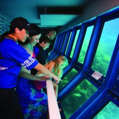 Reef Underwater Observatory - Watch all the snorkellers, divers and fish - Great Barrier Reef tour from Cairns