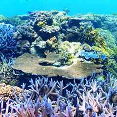 Great Barrier Reef Tours from Cairns & Port Douglas in Queensland Australia