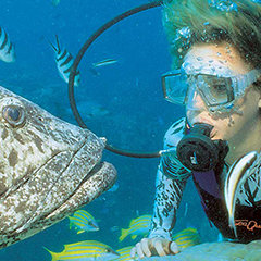 Great Barrier Reef Scuba Diving tours & snorkelling trips in Queensland Australia