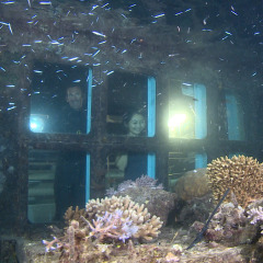 Great Barrier Reef At Night | Underwater Observatory on Pontoon in Cairns