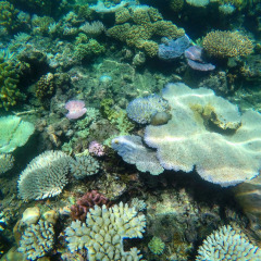 Great Barrier Reef | colourful Corals on our Great Barrier Reef Shark Diving Expeditions