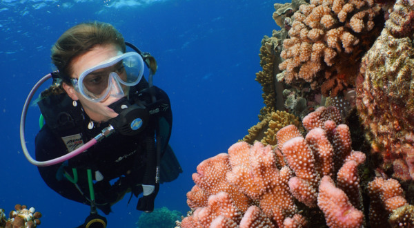 Great Barrier Reef Diving | Port Douglas day trips
