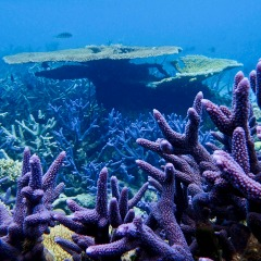 Great Barrier Reef 'Garden' | Coral Stag | Private Overnight Boat Charter | Departs Cairns Tropical North Queensland