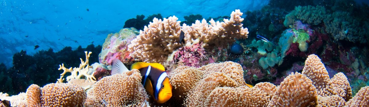 Great Barrier Reef Private Boat Charters