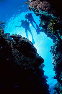 Great Barrier Reef Scuba Divers - The Tour Specialists