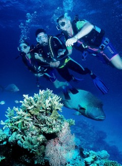 Great Barrier Reef Scuba Diving From Port Douglas In Tropical North Queensland