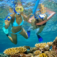 Great Barrier Reef Tours, Cairns Snorkel Tours Queensland Australia - Snorkellers with flotation noodles