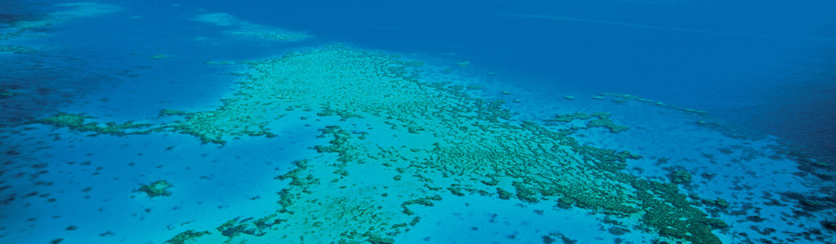 Great Barrier Reef trip and helicopter scenic flight package tours in Cairns