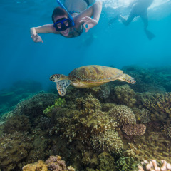 Greta Barrier Reef Sea Turtle - Frankland Islands