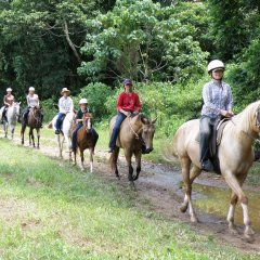 Group Horse Riding - Cairns Horse Riding Tour