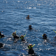 Group of Snorkellers on our Great Barrier Reef tour from Cairns