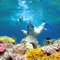 Great Barrier Reef Tour | Snorkeller Getting Up Close to Coral Gardens on the Great Barrier Reef