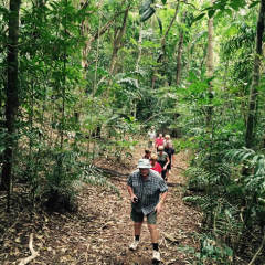 Guided Walk To The Bloomfield Falls | 11 Day Cape York Tour Camping Safari