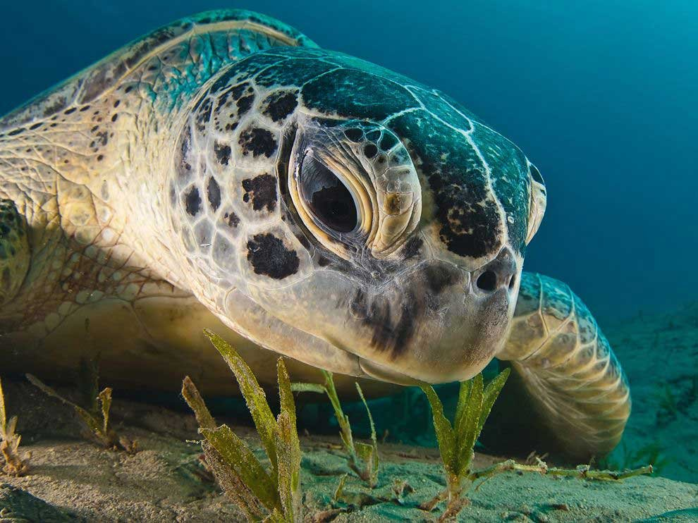 Threatened species of the great barrier reef for Endangered fish species