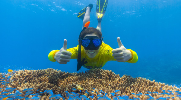 Half Day Great Barrier Reef Trip All Snorkel Equipment Included