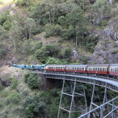 Half Day Tropical North Queensland Kuranda Tour | Departs Daily | Kuranda Scenic Train From Port Douglas