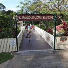 Half Day Kuranda Tour From Port Douglas | Incl Your Dedicated Guide In Kuranda To Drop You Off Where You Need To Be | Stress Free Tour