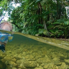 Half Day Port Douglas Tour - River drift snorkel