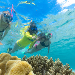 Half Day Reef Trip Includes Reef Interpretation